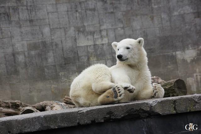 Ausflug Zoo Rostock 11.07.201582