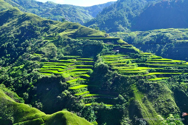 Rice Terraces in Buscalan Kalinga