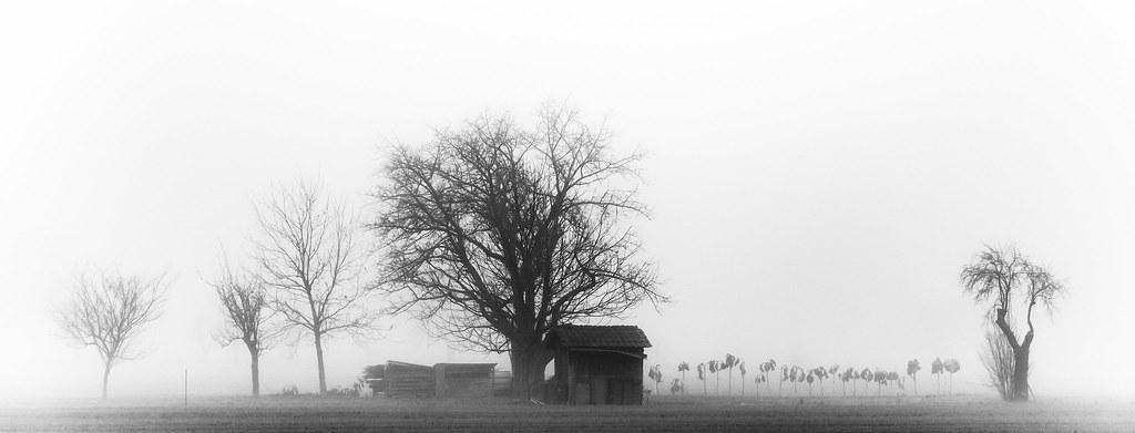 Cot in Fog