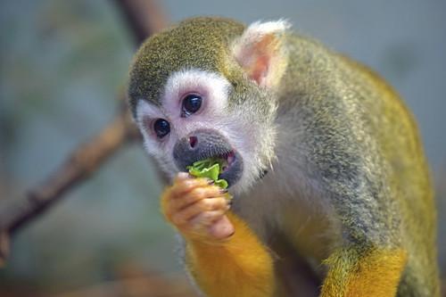 Monkey Salad
