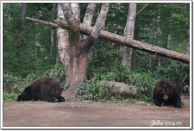 熊牧場 (1)
