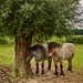 Ardennes Horses by Lucien Schilling
