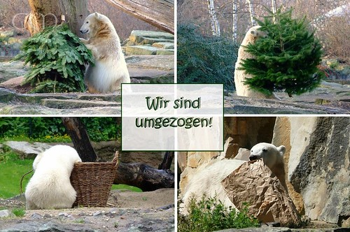 Blog-Umzug_cutecrazyknut