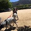 Panda takes his pet steer for a walk...#carmelvalley #cowgirlwinery #California #pandadog #pDoggie #pandadontcare #sweetP #iPhone6 #obsessivehobbyist
