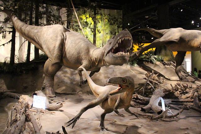 royal-tyrrell-museum-albertosaurus