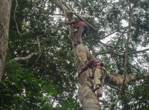 Parrot trappers climb