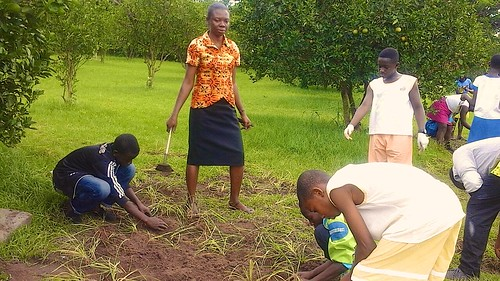 Mary Takyiwaa SSL planting grasses with her pupils at St Louis Jubilee School Kentinkrono, Ghana, on  World Environment Day 2015