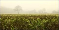 Brouillard - Photo of Chanteloup