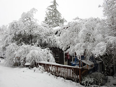 Snowy Backyard - Snowpocalypse 2017_10