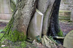 Tree claims grave