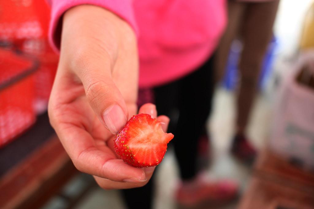 阿蓮三本草莓園 (19)