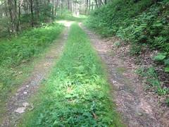 Jasus Creek Road