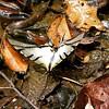 Há borboletas. :fallen_leaf: