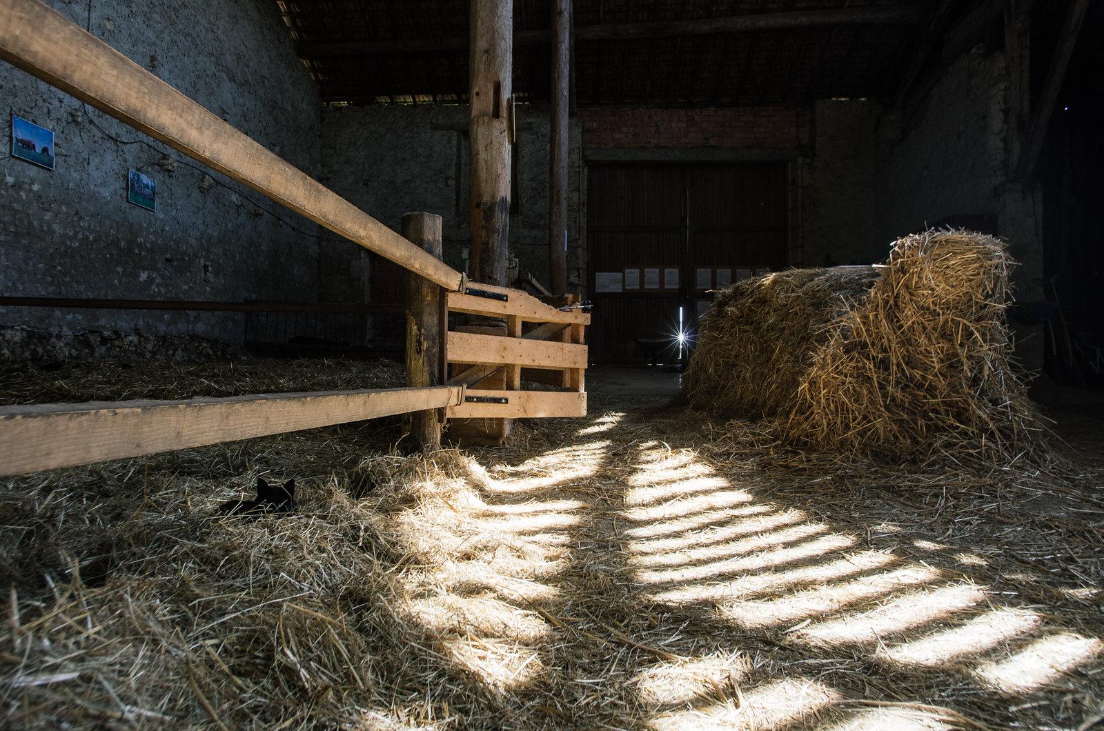 Randonner en Argonne - Balade en ânes - Dans la grange