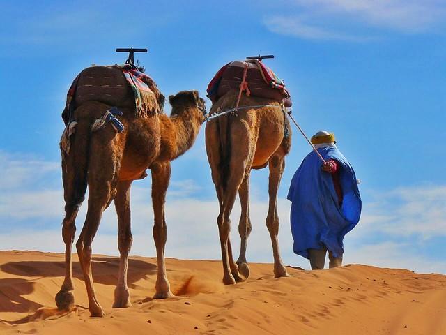Camellero en el desierto del Sáhara (Marruecos)