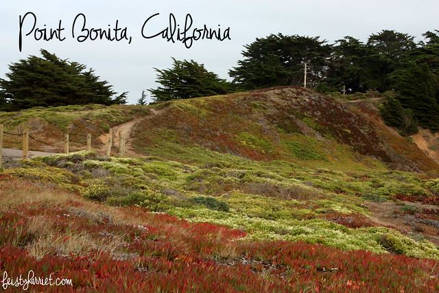 Point Bonita California_feistyharriet_July 2015 (1)