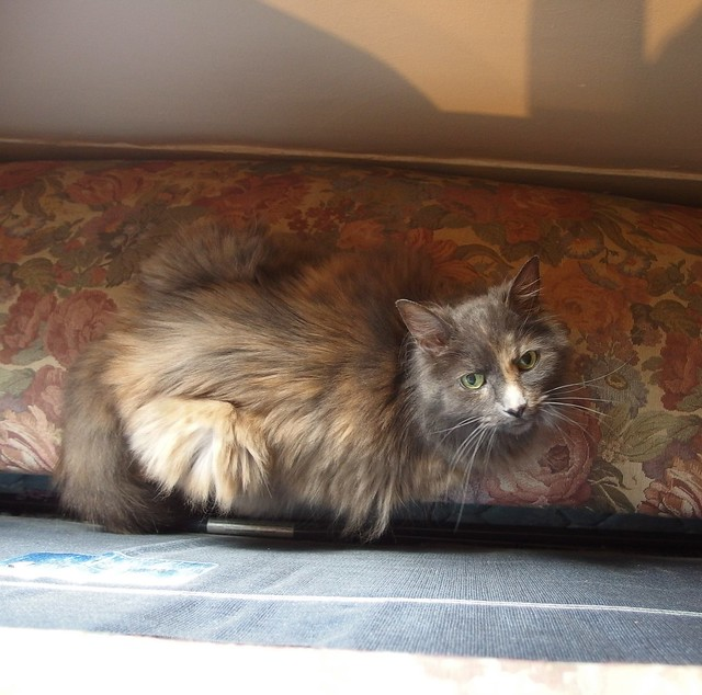 We tipped the couch on its back so Isis crawled through it and slept on the now-horizontal rear cushion