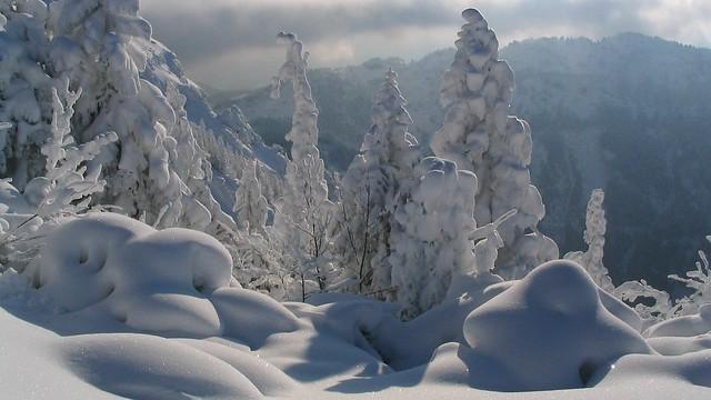 verschneite Landschaft, Canon POWERSHOT A70
