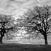 2 trees by E>mar