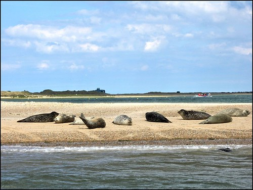 布萊克尼海角是海豹的重要棲地。圖片來源:INTO