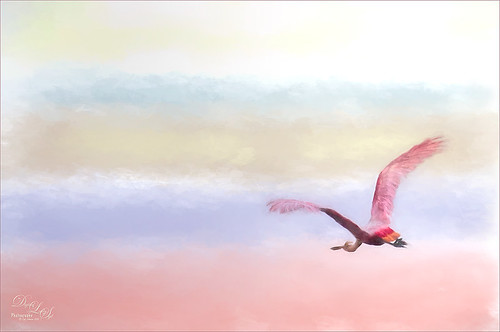 Painted image of a Roseate Spoonbill flying