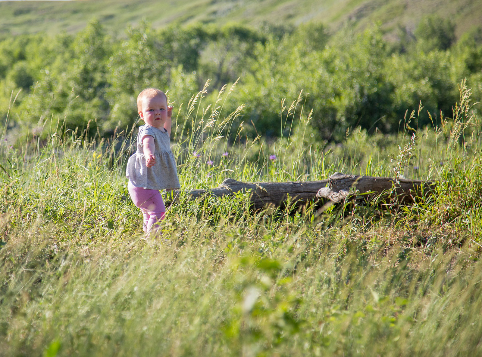 2015-07-03 Oviatt Farm-0044.jpg