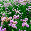Thistle do #thistle #flower #nature