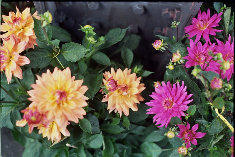 Summer Flowers // Schorlemädchen
