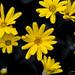 Yellow Petal Flower by rumerbob