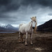 Horse by J.M.Fransen (jero 053) on/off