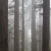 Through The Trees by Adrian Klein