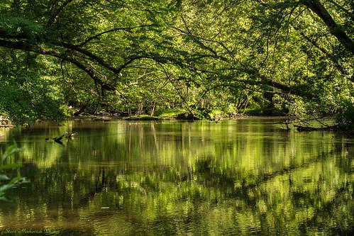 trees lake green water reflections river newjersey spring pond nikon springtime mahwah ramaporiver d3100 smack53