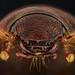 Beetle (TBD) by Yousef Al-Habshi