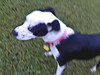 My puppy Queenie #motion #blur - h1440