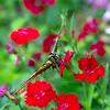 Butterfly 22032013-06