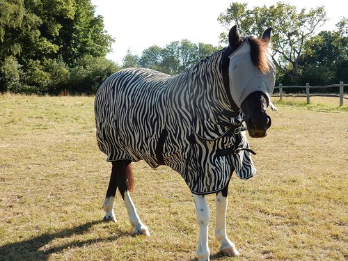 Who was that masked zebra?