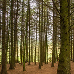 Then Woods, Beacon Fell Country Park, Lancashire