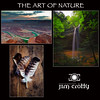 The Art of Nature by Jim Crotty
