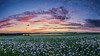 Winchester Poppy Field Sunset by keety uk