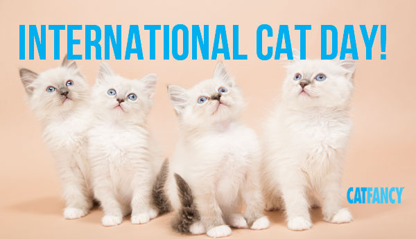 international-cat-day-kittens