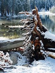 Old Man Down, Tioga Lake, Yosemite 2115