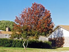 Fall Colors, North Richland Hills, 1994