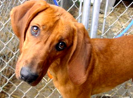 "Adoptable Dog ""Daisy"""