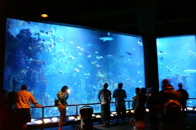 Neat Aquarium Flickr Photo Sharing
