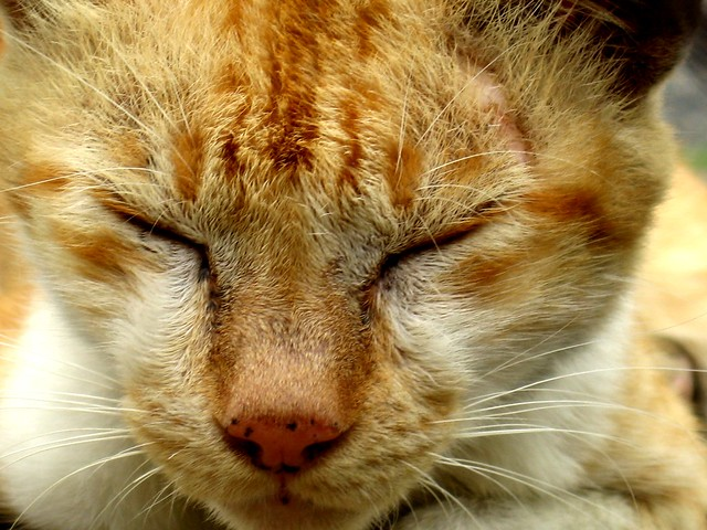 Cat Keeps Closing Eyes And Jerking Head