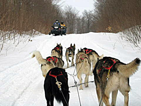 37125626 eeeb21f161 Cool Dog Sledding images
