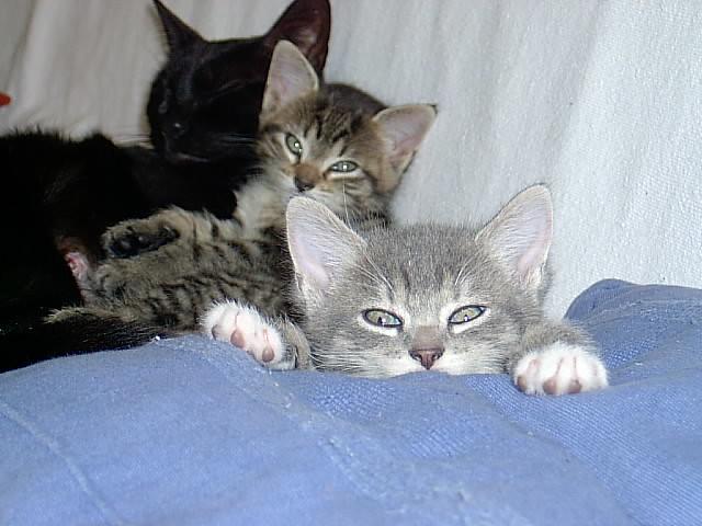 Total Kitten Cuteness 3
