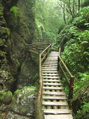 trail(0.0), rope bridge(0.0), nature reserve(1.0), woodland(1.0), rainforest(1.0), old-growth forest(1.0), forest(1.0), natural environment(1.0), ravine(1.0), jungle(1.0),