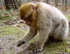 Affenwald die Zweite