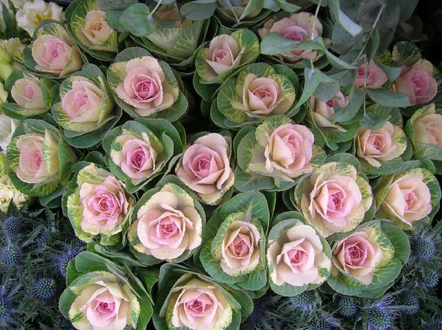 cabbage roses flickr photo sharing. Black Bedroom Furniture Sets. Home Design Ideas